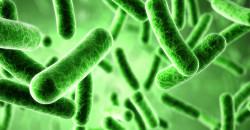 Τροφικές δηλητηριάσεις του καλοκαιριού: ένας κίνδυνος που μπορεί να μας ταλαιπωρήσει κατά τους θερινούς μήνες.
